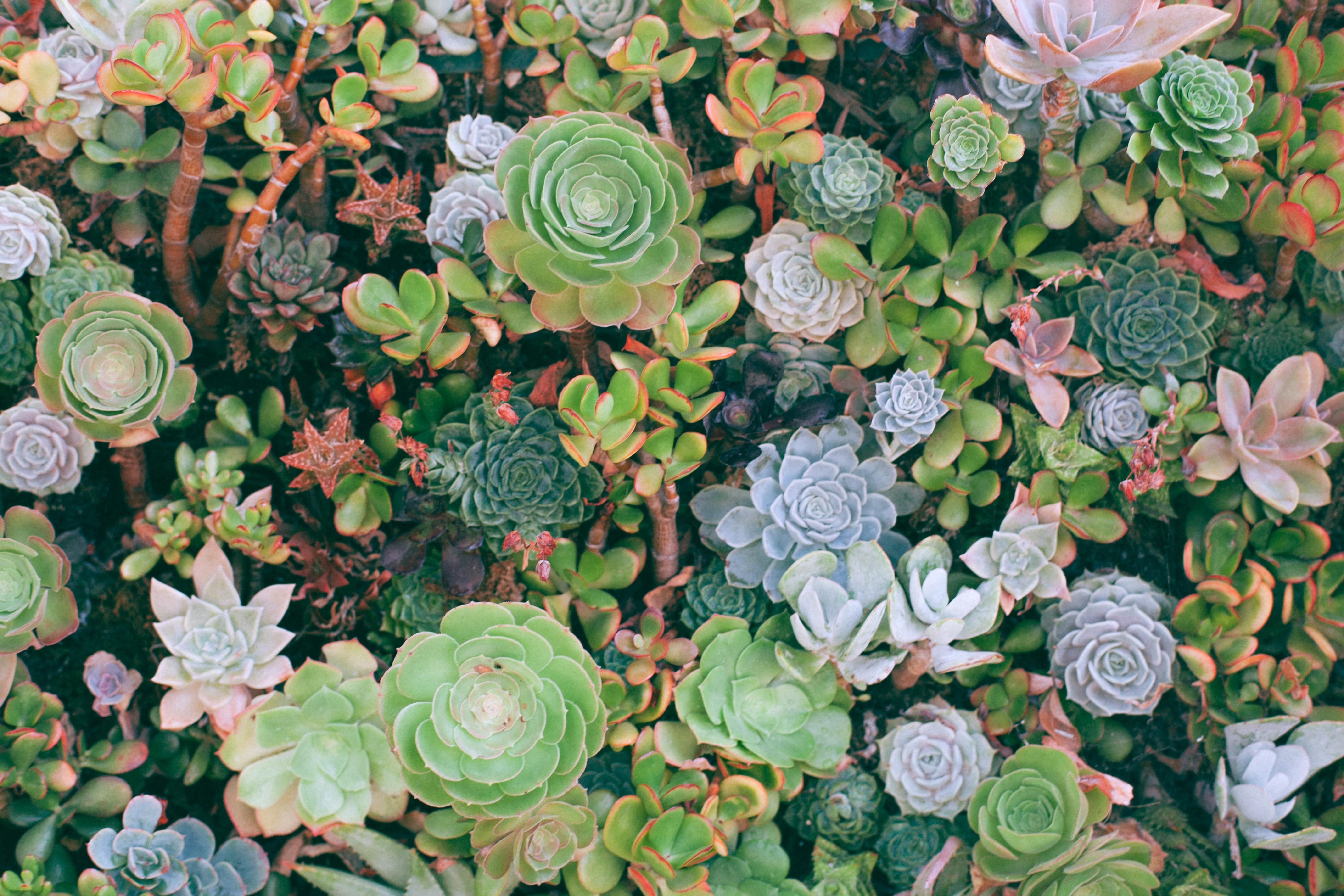 Plante Méditerranéenne Sans Arrosage guides jardinage : du jardin aux jardins - edisud